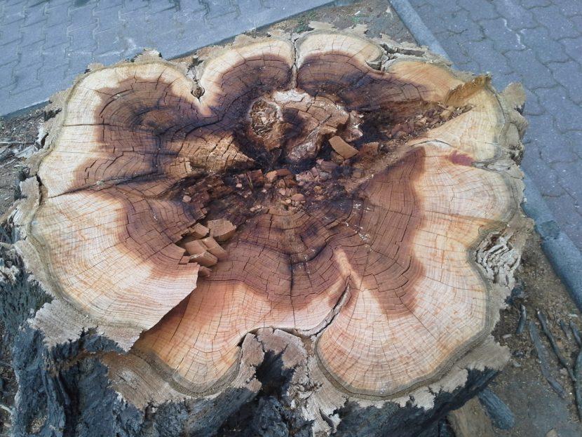 Nielegalna wycinka drzew