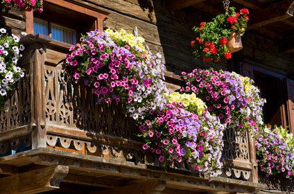 Kwiaty na balkon i taras