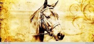 głowa konia fototapety