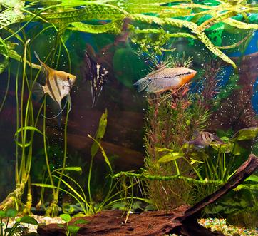 Domowe akwarium