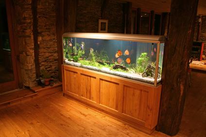 Akwarium w domu